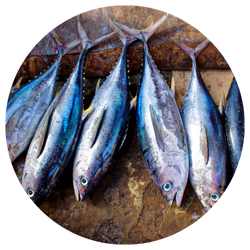 Fish, PFAS Testing from NMS Labs